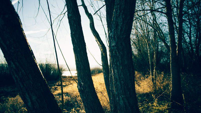 impactist_grassland07.jpg